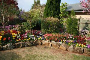 Toowoomba 花園比賽得獎私家花園。