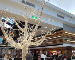 聖誕樹@Brisbane